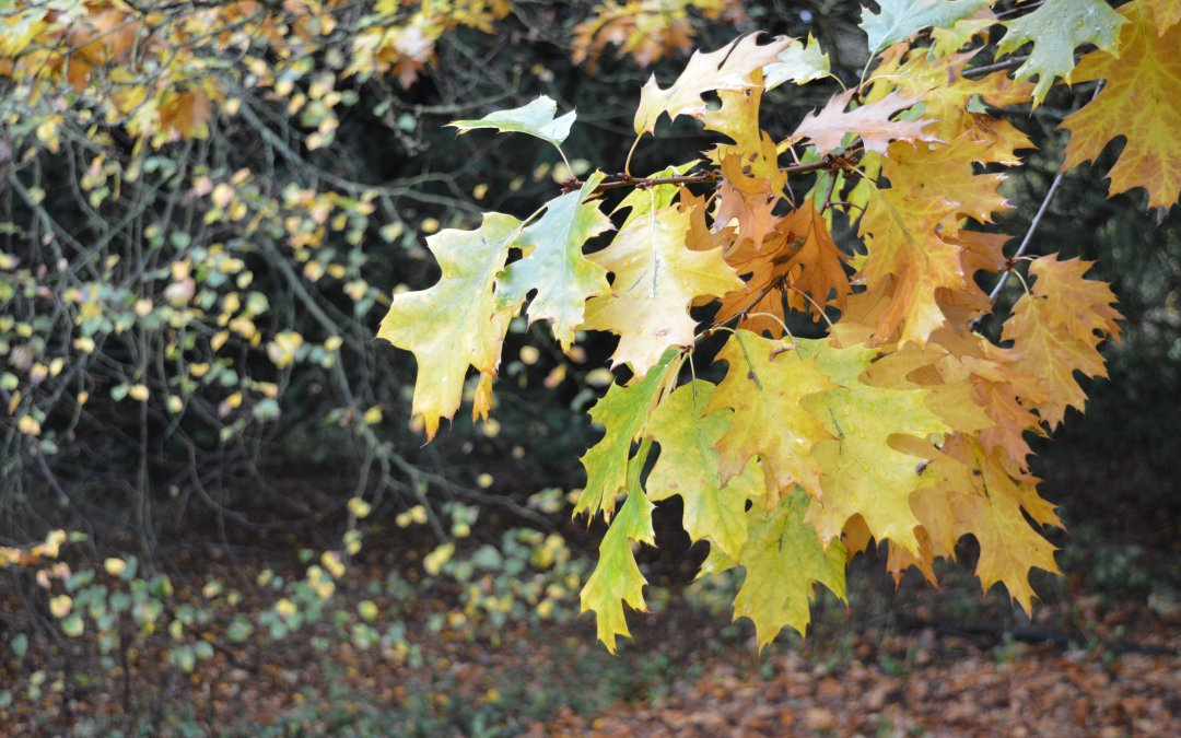 Things to enjoy this Autumn at Belvoir
