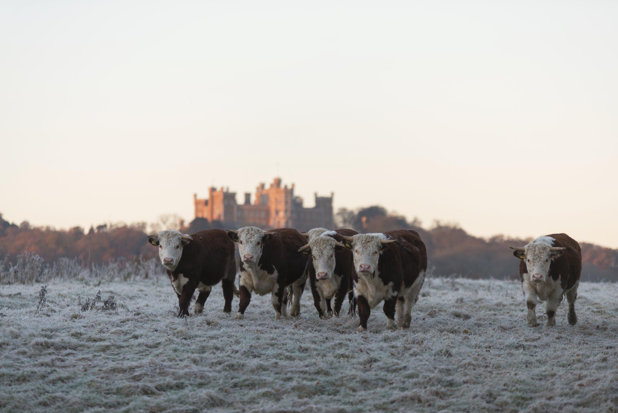 farm land belvoir castle